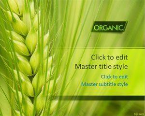 Plantilla PPT de Trigo Orgánico